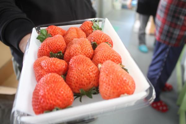 復興イチゴ、出荷中!