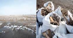 ボランティアの手によって瓦礫撤去された後の土地