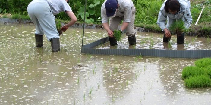 放射能と共に生きる 福島の農業【前編】