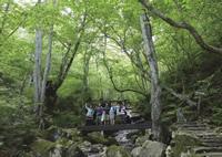 農村風景のサイクリングと、原生林のハイキングがセットになったツアーに参加した。弁当付き、約5時間、9,800円。