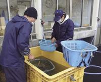 牡蠣の剥き場で就労トレーニング!?元ホームレス・生活保護受給者への支援で「恩送り」の想い支える