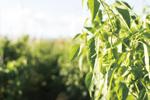 農業トレーニングセンタープロジェクトに集う挑戦者たちー東北から生まれる新しい農業の息吹き【前編】