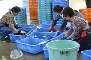 水揚げされたばかりの魚が出際よく仕分けられる、活気ある漁港