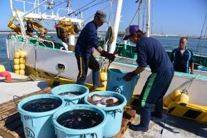 24歳の息子が乗る佐藤さんの漁船。漁労長は弟が引き継いだ