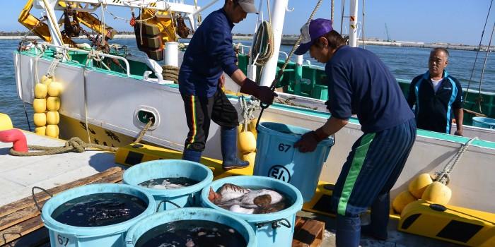 [福島県相馬市] 豊かな漁場と若い漁師の海 福島漁業の今と未来
