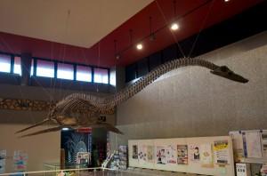 ピー助のモデルになった「フタバサウルススズキイ」