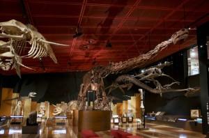 いわき市に関係のある化石が並んでいる「化石展示室」