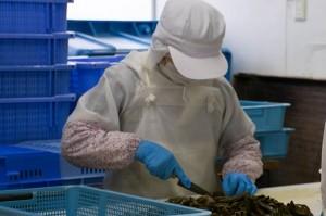 茎ワカメの製造は手作業。ワカメから歯ごたえのある茎の部分を切り取って使う