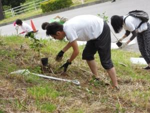 職人さんの指導を受けたあと、各々が苗木を手に取り植樹を行う