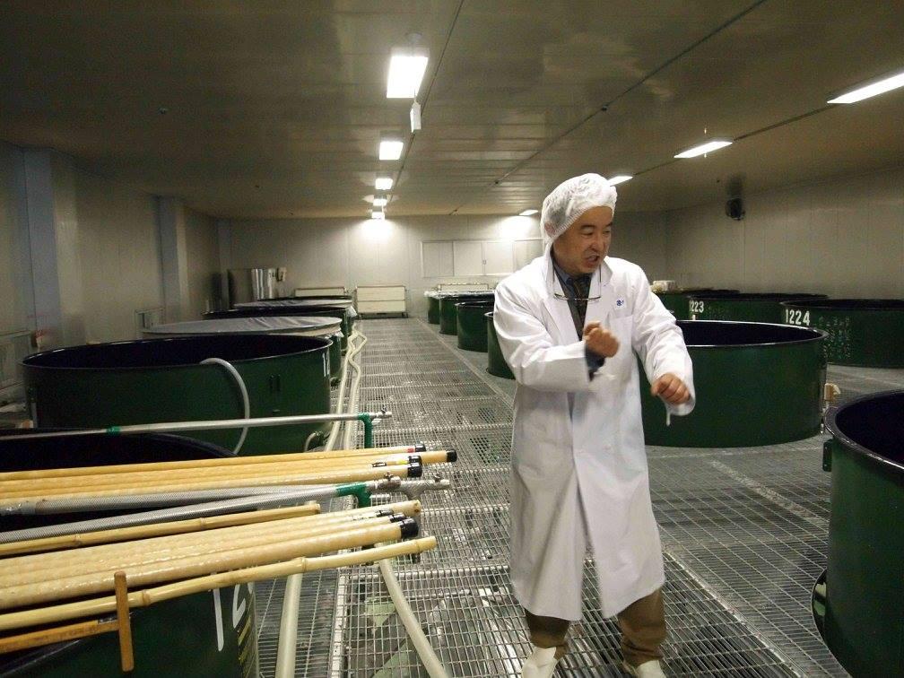 発酵中の酒をかき混ぜる櫂入れ(かいいれ)の様子を説明する宮森社長。どの程度混ぜるかは、杜氏の感覚が頼りです。