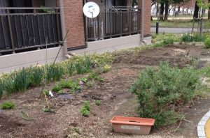 岩手県釜石市の復興公営住宅の傍で見かけたインフォーマルな菜園。このような菜園が広がると、モノとモノの交換関係の元手が生まれてくる。