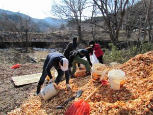 今回のプログラムのメイン作業の1つ、木材チップを掘り起こす作業
