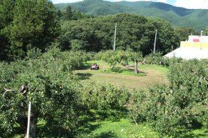 りんご畑の広さは1ヘクタール。本来、この広さがあれば現状の4~5倍のりんごの木を植えることができるそうです。1本1本の間隔をゆったりとって育てています。